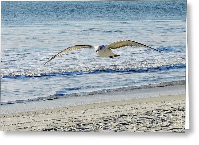 Best Ocean Photography Greeting Cards - Gull At The Beach Greeting Card by D Hackett