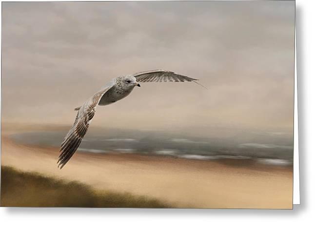 Sea Birds Greeting Cards - Gull At The Shore Greeting Card by Jai Johnson