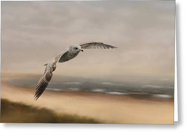 Flying Gulls Greeting Cards - Gull At The Shore Greeting Card by Jai Johnson