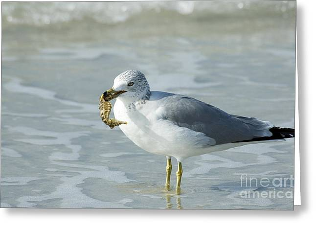 Sea Horse Greeting Cards - Gull Eating Seahorse Greeting Card by Mark Newman