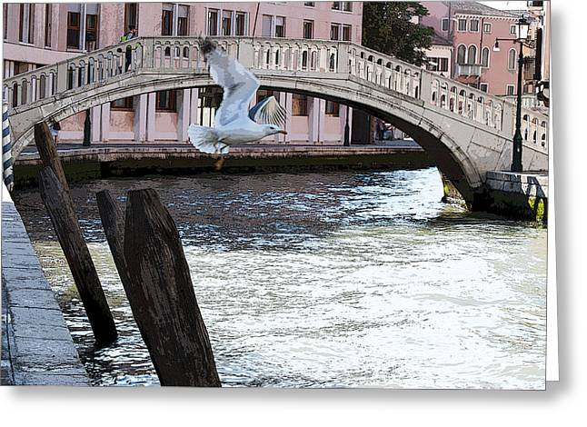 Flying Seagull Greeting Cards - Gull Flying Over a Canal Venice Italy Color Greeting Card by Sally Rockefeller