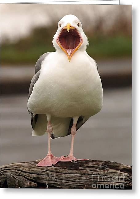 Tim Moore Greeting Cards - Gull Gawking Greeting Card by Tim Moore