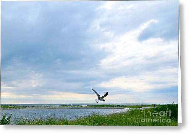 Recently Sold -  - Flying Seagull Greeting Cards - Gull in Flight  Greeting Card by Nancy Patterson