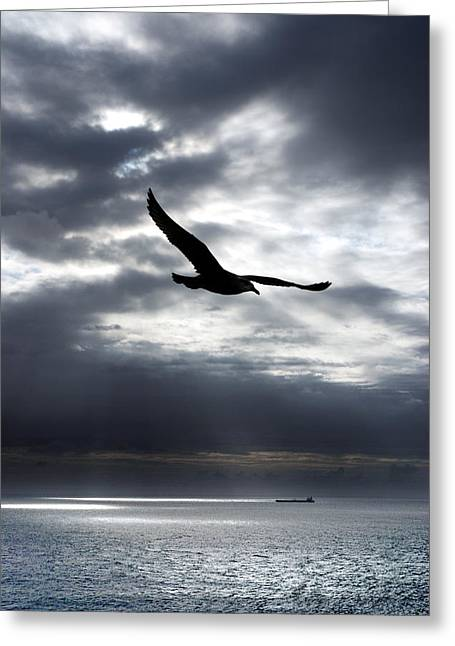 Gull Seagull Greeting Cards - Gull Greeting Card by Mark Rogan