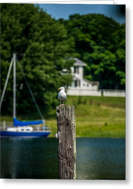 Peaceful Scene Greeting Cards - Gull on Piling Greeting Card by Paul Freidlund