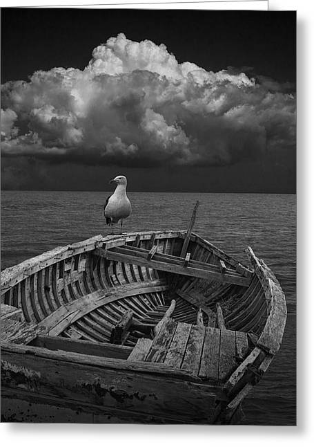 Row Boat Greeting Cards - Gull on Shipwrecked Boat Greeting Card by Randall Nyhof