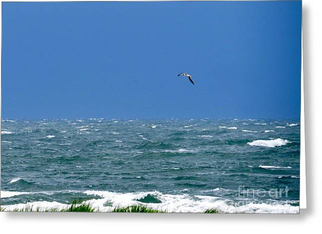 Recently Sold -  - Flying Seagull Greeting Cards - Gull Over The Ocean  Greeting Card by Nancy Patterson