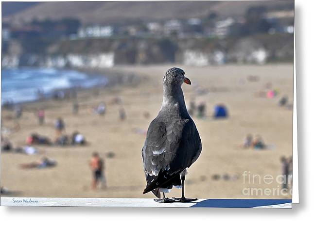 Susan Wiedmann Greeting Cards - Gull Watching Beach Visitors Greeting Card by Susan Wiedmann
