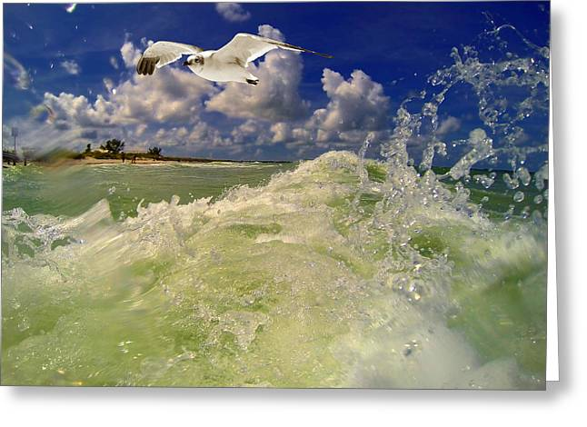 My Ocean Greeting Cards - Gull Waves Greeting Card by Kevin Cable