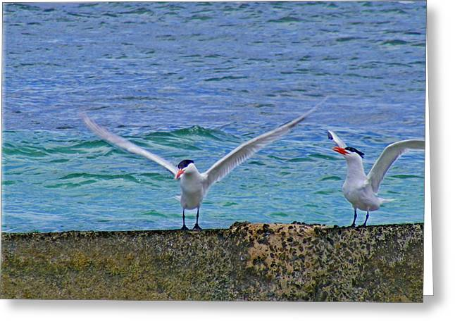 Water Fowl Mixed Media Greeting Cards - Gull Yoga Greeting Card by Rebecca Flaig