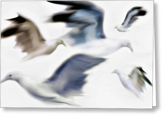 Flying Seagull Greeting Cards - Gulls 2 Greeting Card by Steve Ohlsen