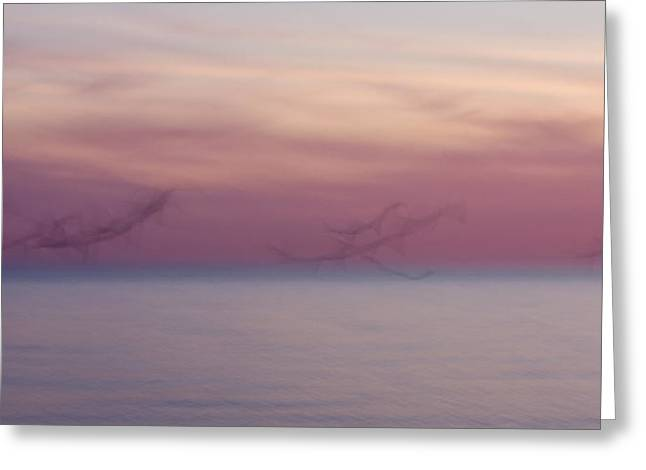 Abstract Beach Landscape Greeting Cards - Seagulls in Motion Greeting Card by Adam Romanowicz