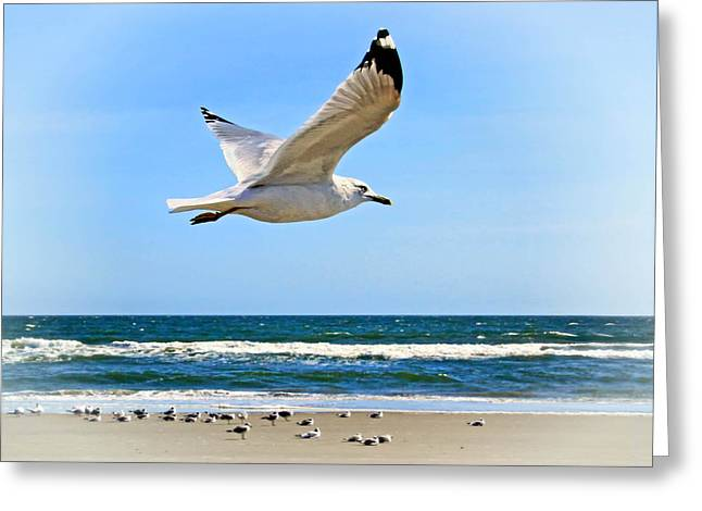 White Greeting Cards - Gulls along the surf Greeting Card by Carolyn Derstine