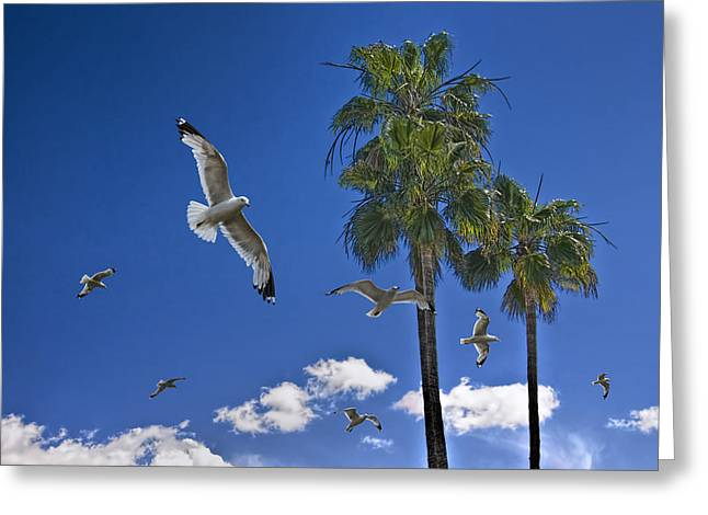 California Art Greeting Cards - Gulls among the Palms Greeting Card by Randall Nyhof