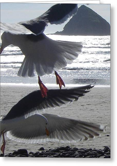 Recently Sold -  - Flying Seagull Greeting Cards - Gulls At Play Greeting Card by De Ann  Troen