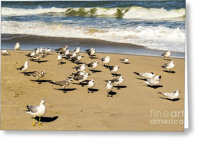 Recently Sold -  - Flying Seagull Greeting Cards - Gulls at the beach Greeting Card by Zina Stromberg