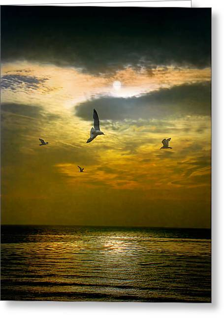 Randy Greeting Cards - Gulls flying at sunset by Laguna Beach in California Greeting Card by Randall Nyhof