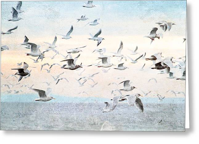 Flocks Of Birds Mixed Media Greeting Cards - Gulls Flying Over the Ocean Greeting Card by Peggy Collins