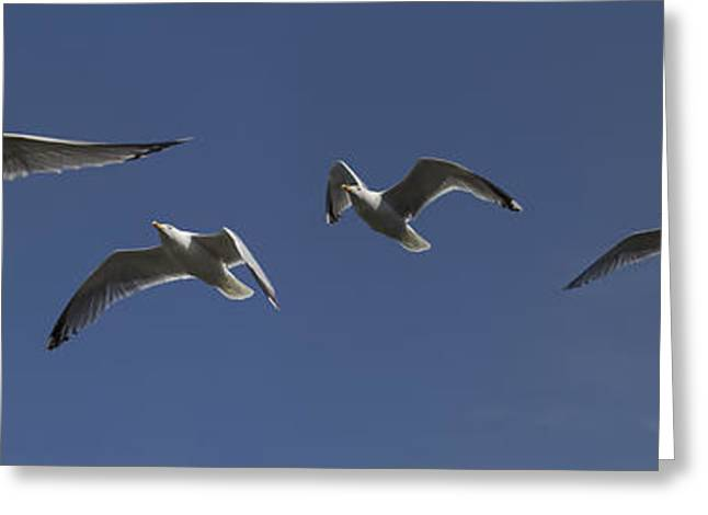 Flying Seagull Greeting Cards - Gulls Greeting Card by Graham Moore