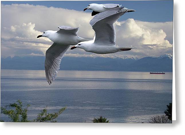 George Cousins Greeting Cards - Gulls in Flight Greeting Card by George Cousins