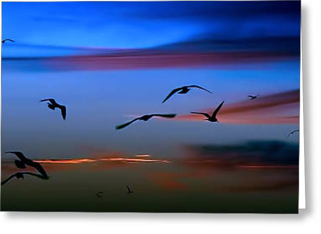 Chatham Greeting Cards - Gulls in the Glow Greeting Card by David DeCenzo
