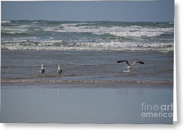 Newport Greeting Cards - Gulls in the Surf Greeting Card by Mandy Judson