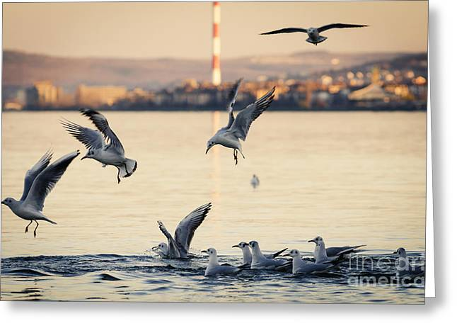 Eat Free Greeting Cards - Gulls Greeting Card by Jelena Jovanovic