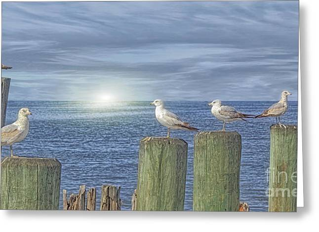 Tom York Images Greeting Cards - Gulls On The Pier Greeting Card by Tom York Images