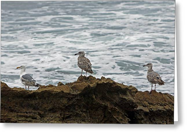 Sea Birds Pyrography Greeting Cards - Gulls Podium  Greeting Card by Shoal Hollingsworth