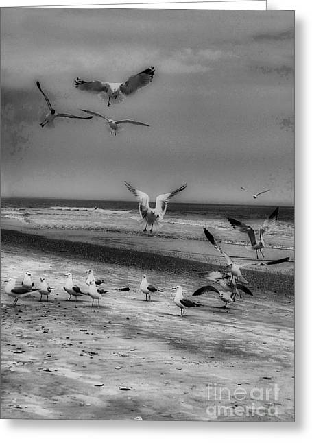 Kinds Of Birds Greeting Cards - Gulls Greeting Card by Skip Willits
