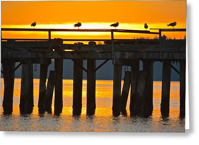 Gulls With A View Greeting Card by Rachel Cash