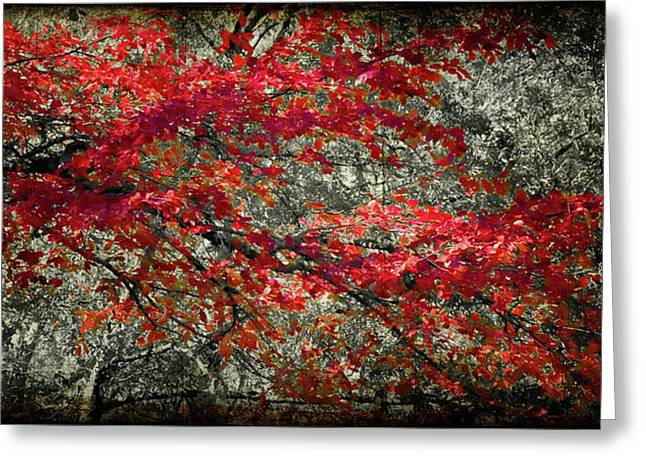 Gum Cypress Greeting Cards - Gum Fall Greeting Card by Lana Trussell