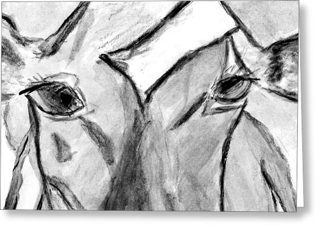 Steer Drawings Greeting Cards - Gurnsey in the Window Greeting Card by Elizabeth Briggs