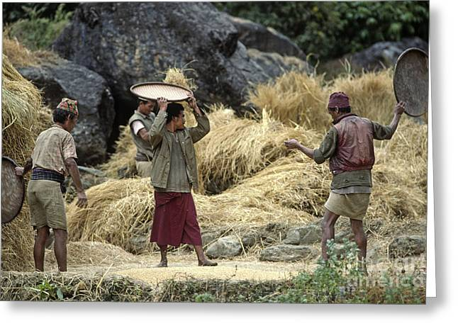 Cooperation Greeting Cards - Gurung Village Harvest - Nepal Greeting Card by Craig Lovell