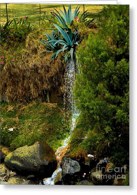 Drain Greeting Cards - Gushing Agave Greeting Card by Al Bourassa