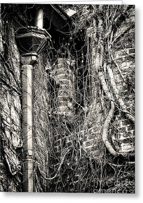 Drain Greeting Cards - Gutter Pipe Greeting Card by John Rizzuto