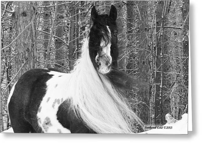 Gypsy Cob Greeting Cards - Gypsy Mare and Winter Wonderland Greeting Card by Feathered Gold Stables