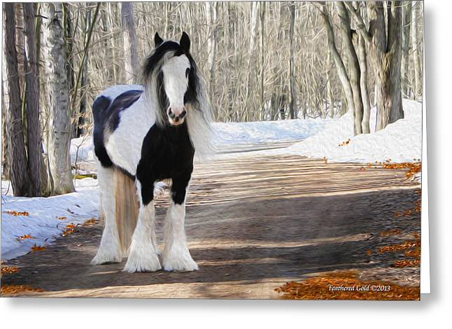 Gypsy Cob Greeting Cards - Gypsy Mare Looking on Greeting Card by Feathered Gold Stables