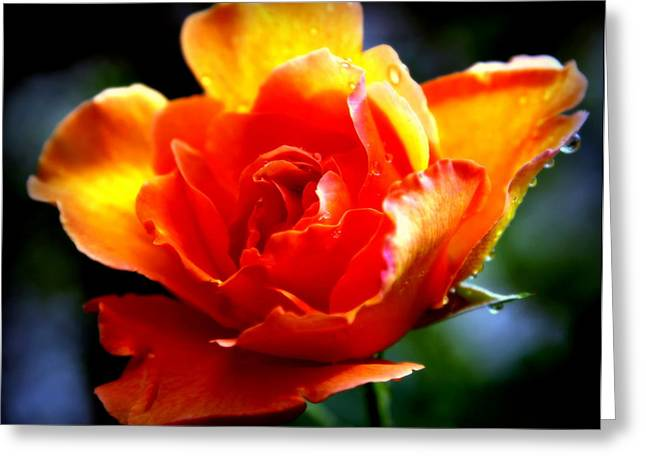 Gypsy Greeting Cards - Gypsy Rose Greeting Card by Karen Wiles