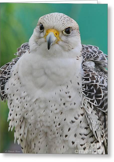Falcon Hunting Greeting Cards - Gyrfalcon Greeting Card by Deborah Benoit