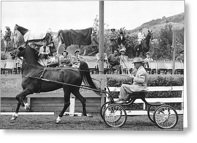 Hackney Greeting Cards - Hackney Harness Horse Greeting Card by Underwood Archives