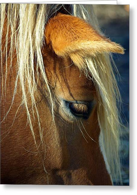 Paul Wash Greeting Cards - Haflinger Beauty Greeting Card by Paul Wash