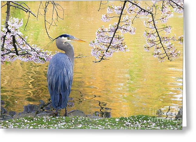 Pond In Park Greeting Cards - Haiku Greeting Card by Michael Wheatley
