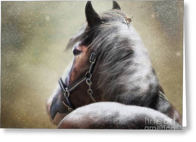 Clydesdale Greeting Cards - Hairs For The Nest Greeting Card by Trudi Simmonds