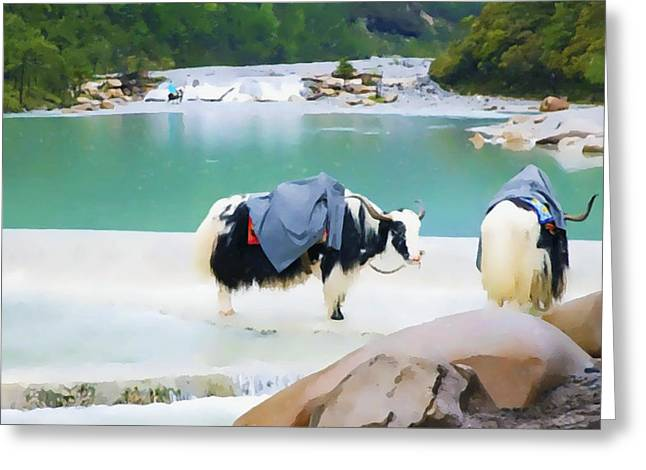 Southern Province Paintings Greeting Cards - Hairy cow in LiJiang Greeting Card by Lanjee Chee