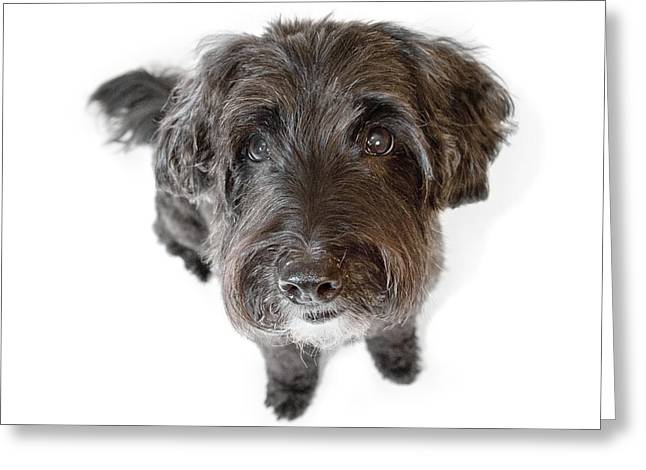 Hairy Dog Photographic Caricature Greeting Card by Natalie Kinnear