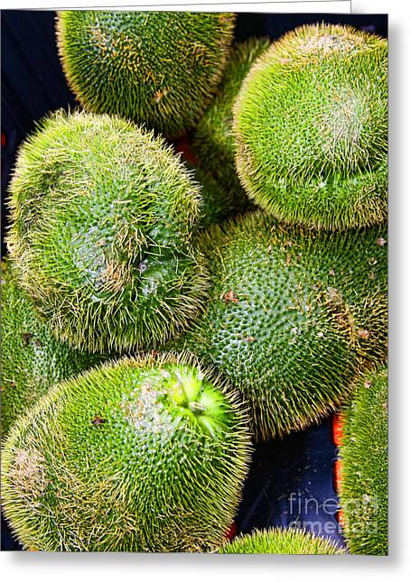 Mango Greeting Cards - Hairy Peary Chayote Squash by Diana Sainz Greeting Card by Diana Sainz