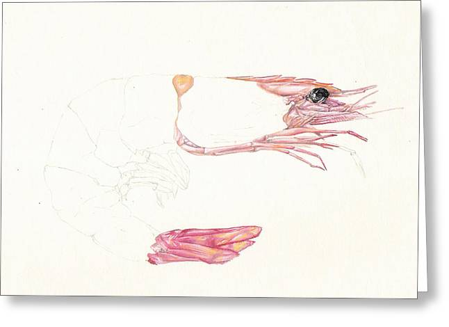 Half A Prawn Greeting Card by Richard Mountford