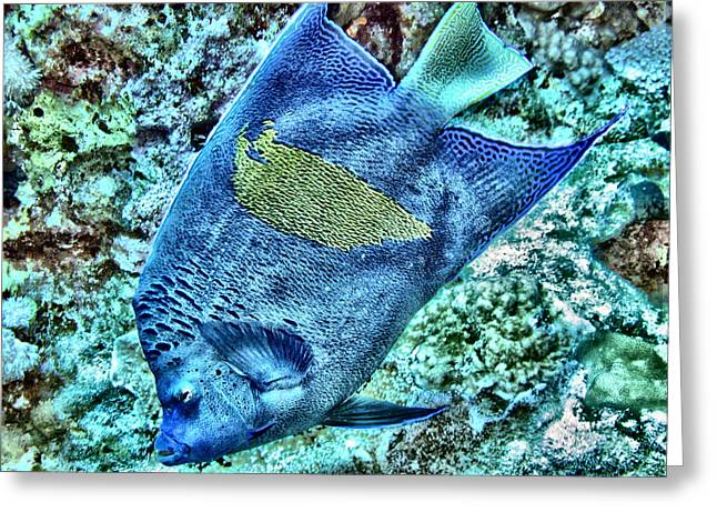 Undersea Photography Digital Art Greeting Cards - Half Moon Angel Fish Greeting Card by Roy Pedersen