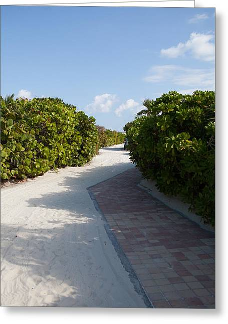 Half Moon Cay Greeting Cards - Half Moon Cay Trail Greeting Card by Christopher McCartin